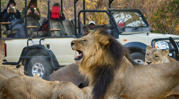 Chobe Game Drive Safari